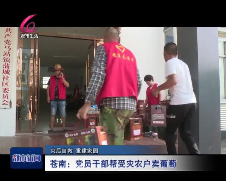 蒼南:幹部幫災農賣葡萄