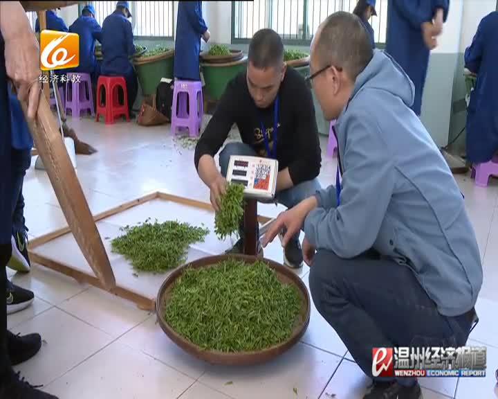 温州评出十大制茶大师